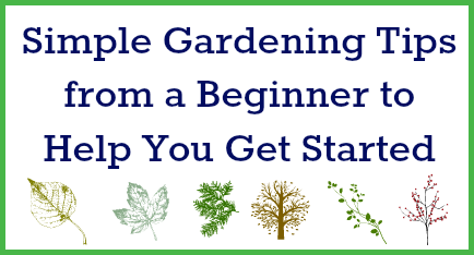 Gardening tips to save money how do you start and how much money can you save manufacturer - Practical tips to make money from gardening ...
